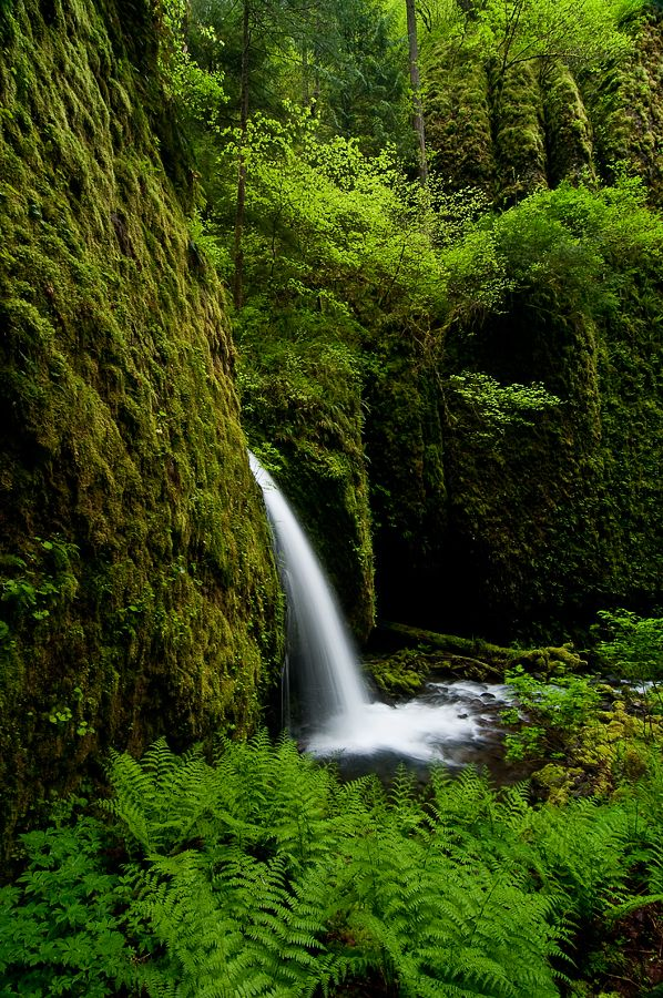 450 best or columbia river gorge oneonta gorge for Columbia woods