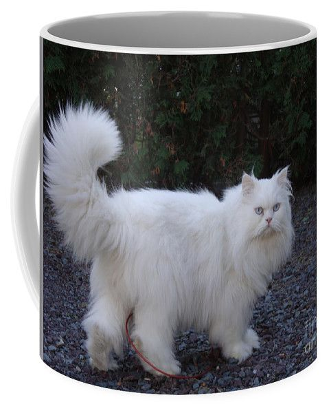 Persian Cat White Coffee Mug by Lyssjart Sj.  Small (11 oz.)