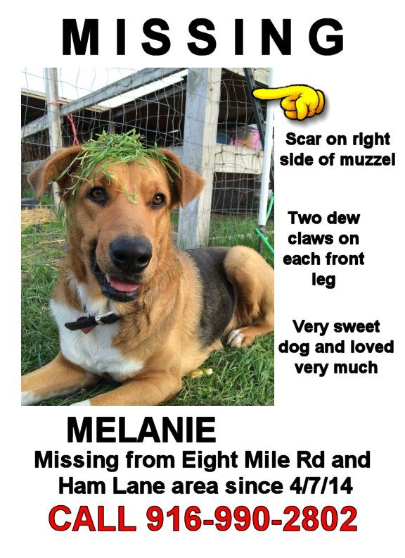 80 best PETu0027S-LOST, MISSING, STOLEN AND FOUND images on Pinterest - lost dog flyer examples