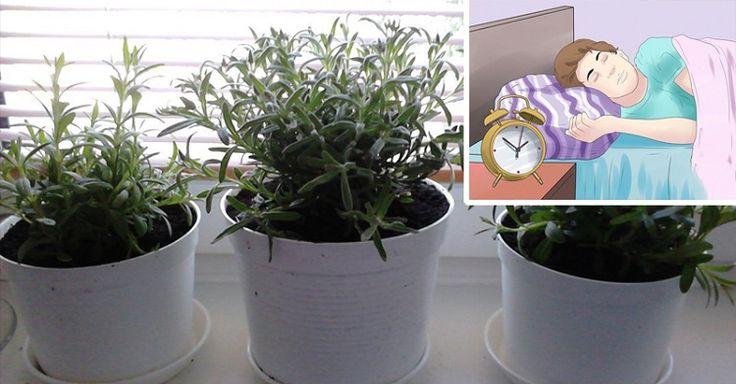 Coloque estas plantas no seu quarto: elas purificam o ar e melhoram o seu sono