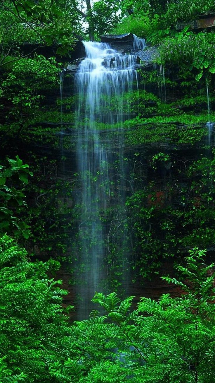 Nature Forest Waterfall iPhone 6 wallpaper | iPhone 6 ...