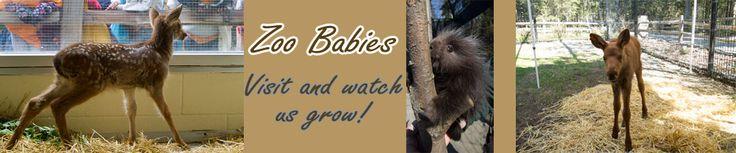 home | The Alaska Zoo
