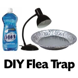 17 best images about flea traps on pinterest roaches homemade and flea powder. Black Bedroom Furniture Sets. Home Design Ideas