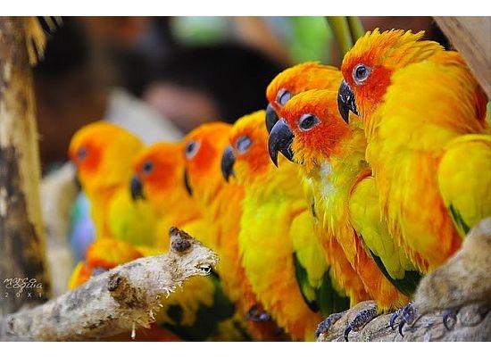 46 Besten Coloriage Perroquet Bilder Auf Pinterest