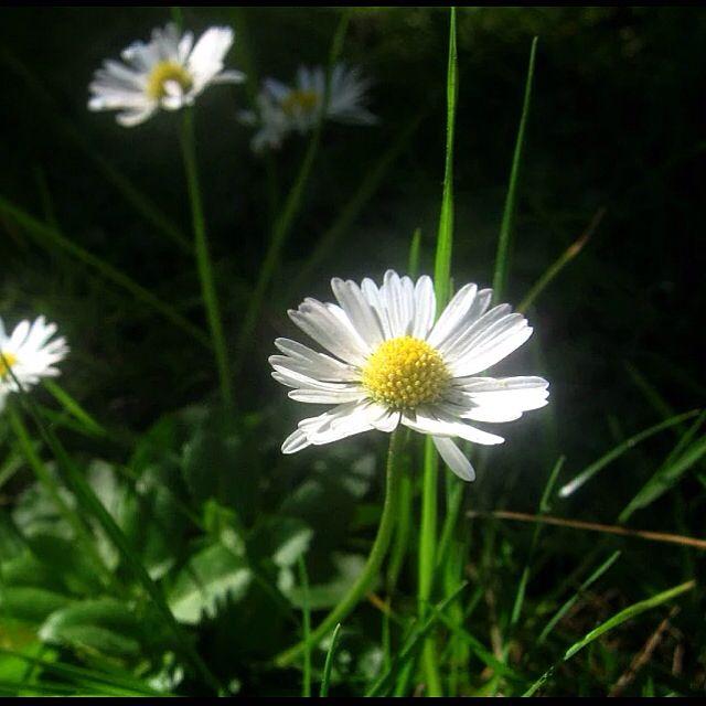 Flor con gotas después de llovizna invernal. Viña del Mar 2014 Foto cámara Canon Powershot 550SD macro (MMM)  #flor #flowers