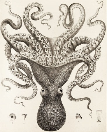 again....awesome....although I'm also totally afraid....engraved squid