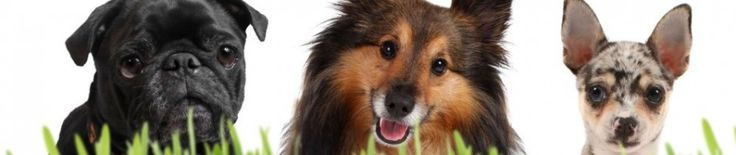 Making An Effective Homemade Flea Treatment For Dogs~ Make a drug-free and chemical-free flea treatment for dogs.