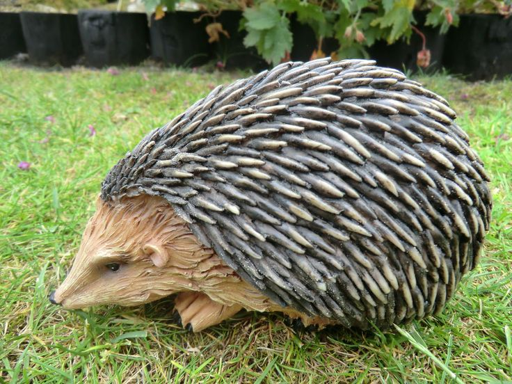 1000+ Images About Hedgehogs For The Garden Or Outdoors On