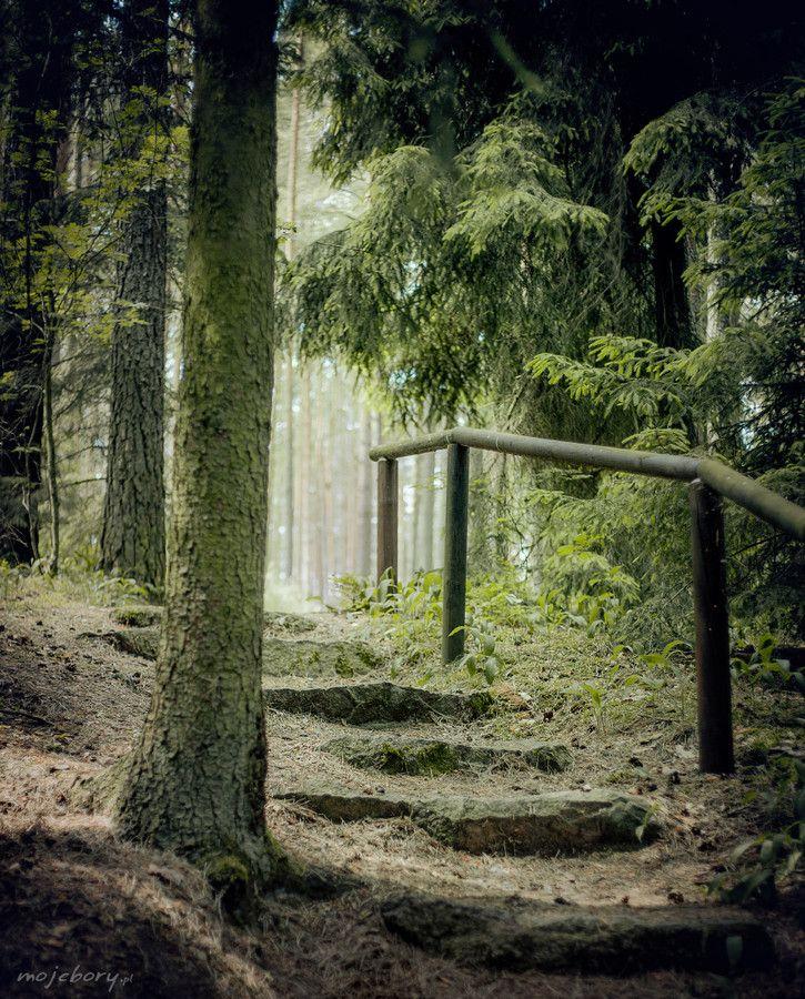 Tucholskie Forests - Poland (Bory Tucholskie, Polska)