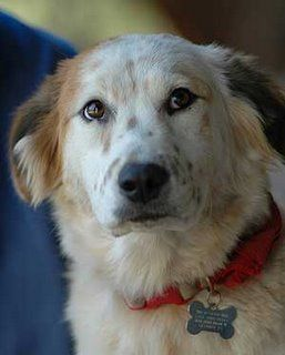 Who says you need purebred dogs? Meet the Mutts & adopt!