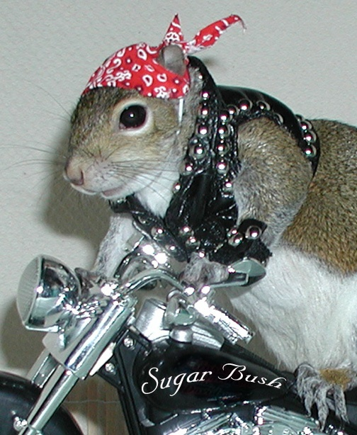 Hi everybody! The one and only Sugar Bush Squirrel here ...