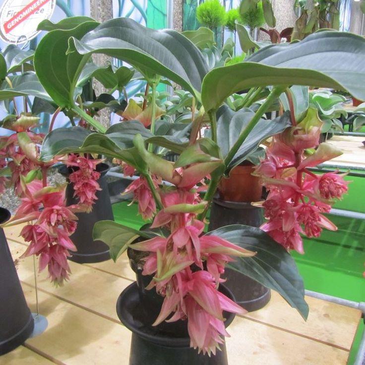 Oltre 25 fantastiche idee su piante da interno su pinterest piante da appartamento - Piante da interno poca luce ...