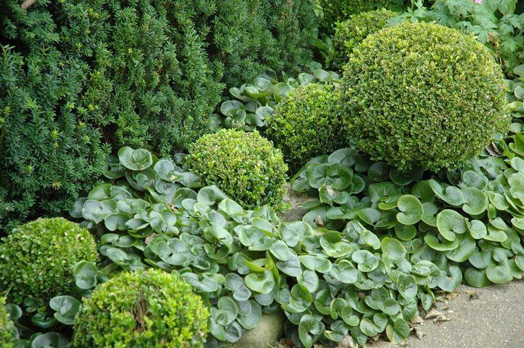 Grappige bladcombinatie met groenblijvers