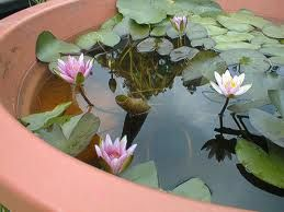 A large container such as this or large glazed pots can really add serenity to a small garden that doesn't have the room for a pond. Please make sure that you check in with Vector Control in your city or county. They will provide you with mosquito fish (they look like guppies) to prevent mosquitos from breeding in still water.