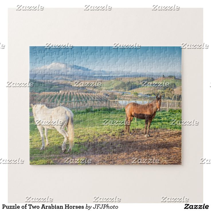 Puzzle of Two Arabian Horses