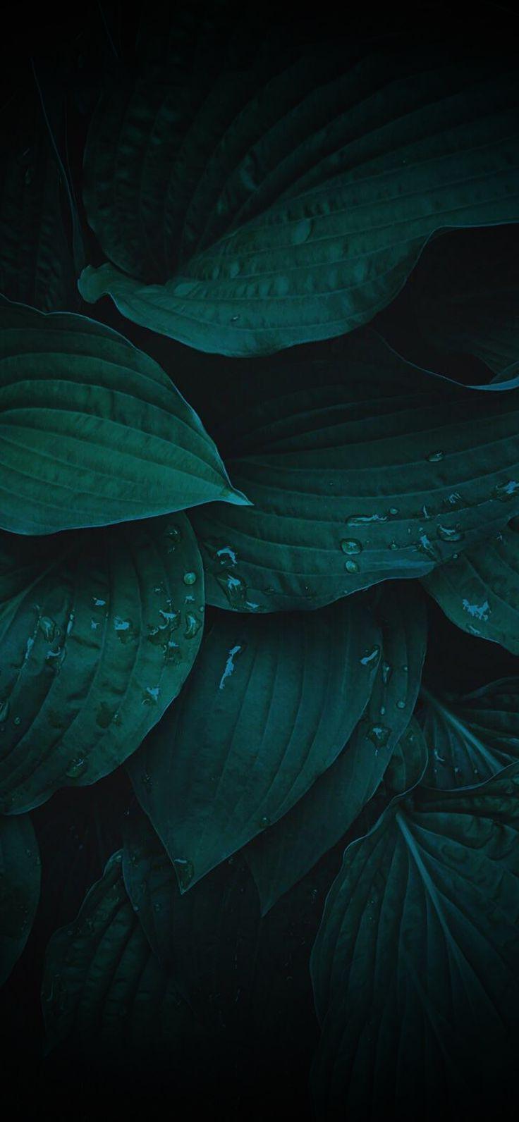 Dark Leaves Ioswall Green Wallpaper Phone Dark Background Wallpaper Dark Green Wallpaper
