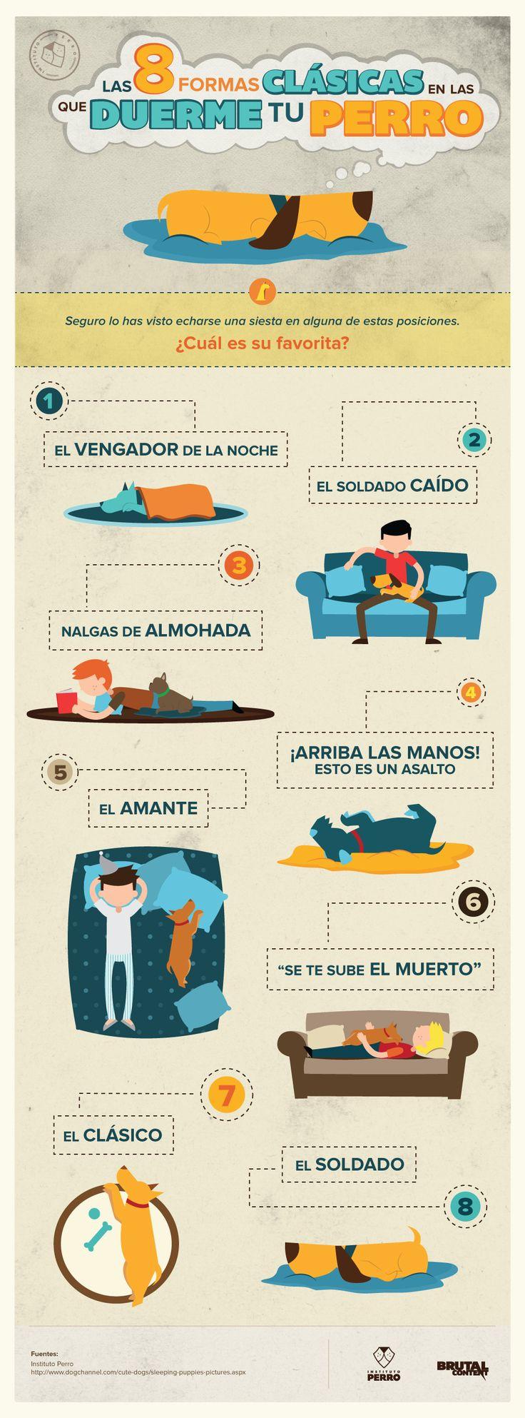 Tu perro durmiendo