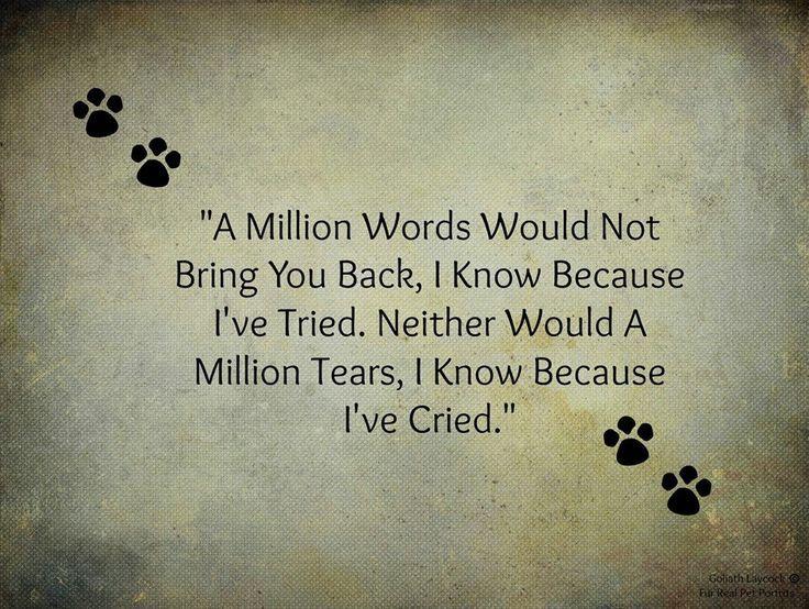 Such a touching pet memorial