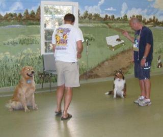 Buyer beware when hiring a dog trainer