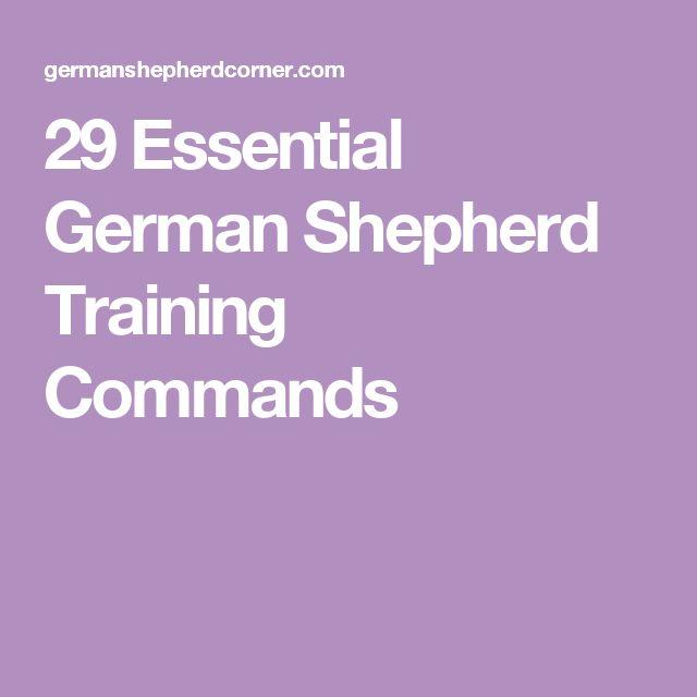 29 Essential German Shepherd Training Commands