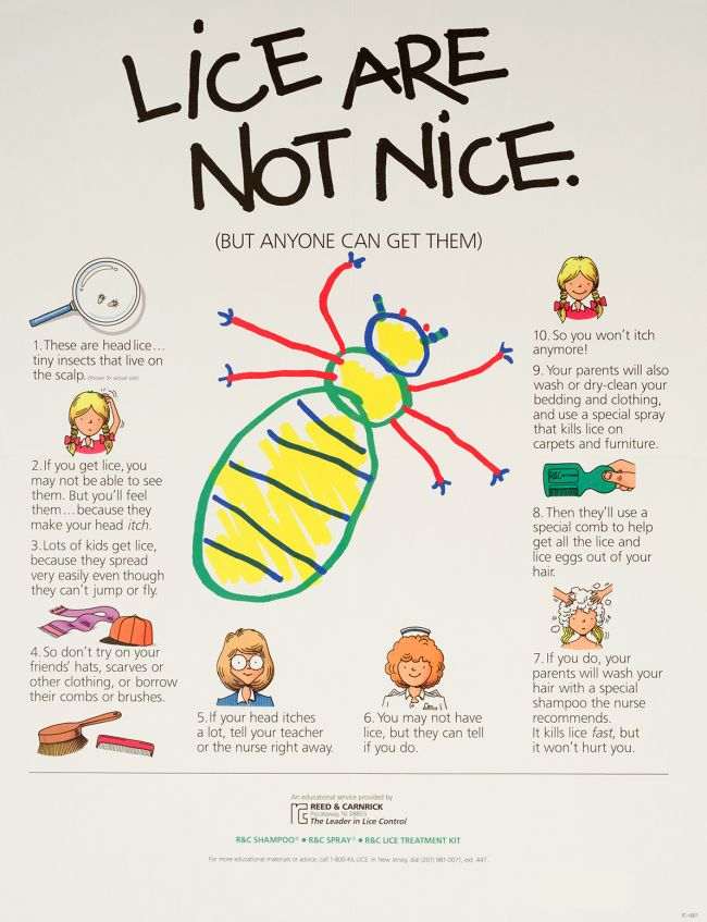 Lice may be the death of me!