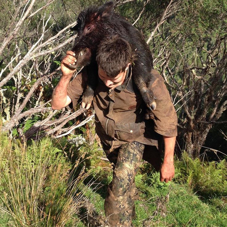 Team member Mark carrying out a wild boar in New Zealand! ���� #rainsfordtribe #rainsfordhunting #wildboar #wildboarhunting #huntingnewzealand #hunting #hunt #outfitters #outfitter #outdoors #wildlife #trophy #hunter #jakt #jagt #jagd #caza #huntinglife #