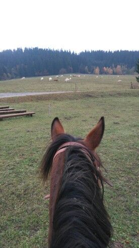 Z konského chrbta 🏇