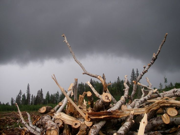 Our namesake, a real Slashpile, the piles of logs and sticks that line the logging roads, a familiar sight to all treeplanters and inspiration for our Slashpile series.