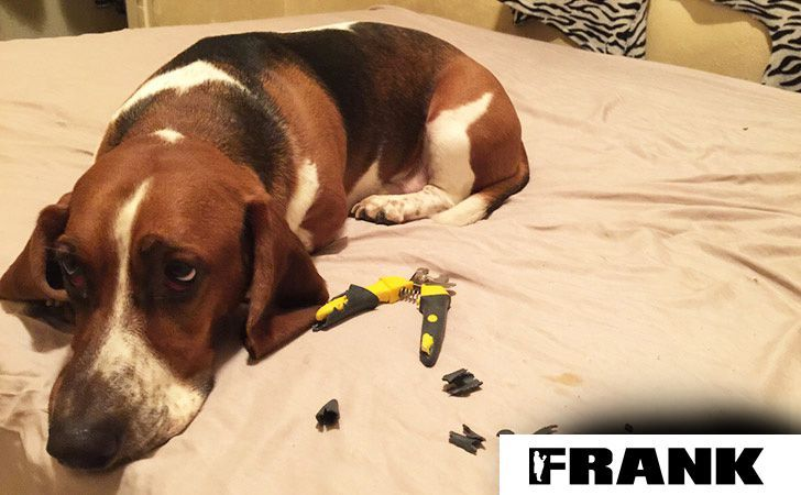 45 Awkward & Guilty Doggies That Will Make Your Day • Page 14 of 44 • FRANK151