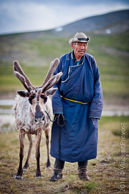 The Reindeer People, Mongolia  ..This reinder's horns are a little off in ther growing pattern and is shedding, so at least this young one has a caring person for it.