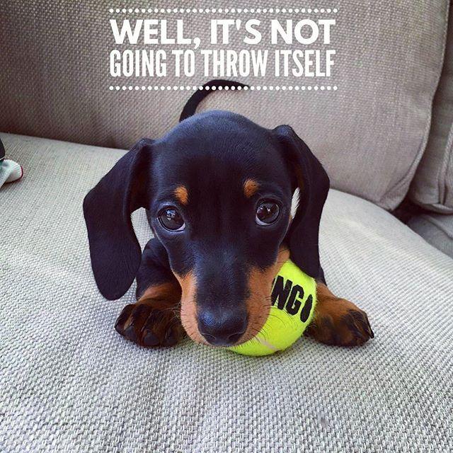 So cute ... . @martha_dachshund