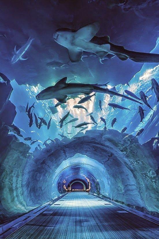Dubai aquarium, Dubai Mall, Downtown Dubai, United Arab Emirates
