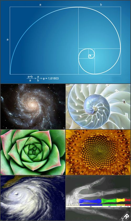 Universal geometry - the golden ratio in nature