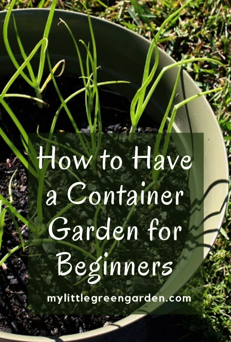 Gardening Services Harrogate Vegetable Gardening For Beginners