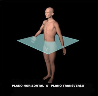 PLANO TRANSVERSAL U HORIZONTAL. Divide al cuerpo en una parte superior y otra inferior, contiene los ejes transversal y sagital.