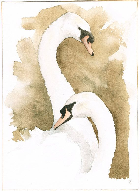 Mute Swans Pair, Original Watercolor Illustration, Free Shipping