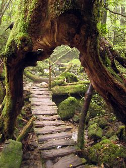 The path…