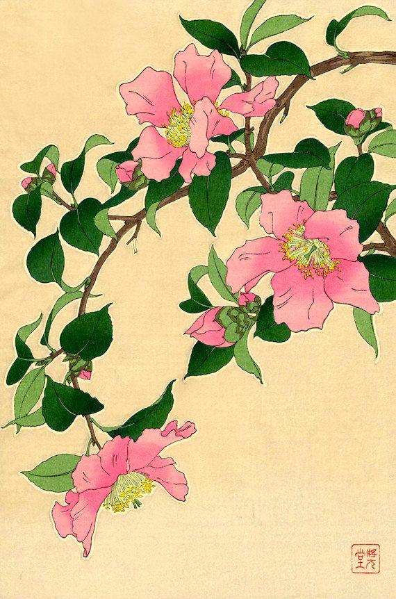 Pink Camellias from the series Floral Calendar of Japan by Shodo Kawarazaki (1889-1973). Pink Camellias FINE ART PRINT, floral botanical art prints, woodblock prints reproductions