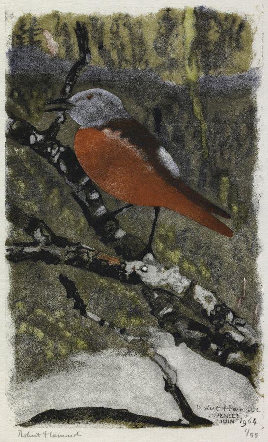 Merle de roche chantant , Robert HAINARD Oiseaux Oiseaux Gravure sur bois n° 407 Obs. 6.1964, Pyrénées (France) bird