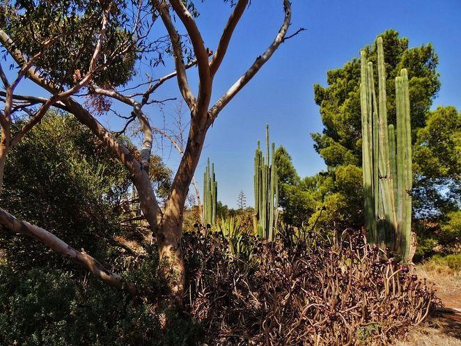 arizona cactus ranch, cactus ranch, cactus garden, joe lowey, windsor, in adelaide, port wakefield, cactus cafe