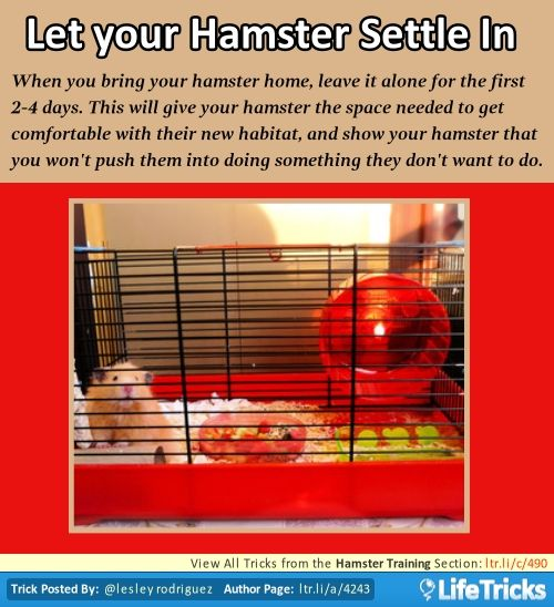 Hamster Training - Let your Hamster Settle In