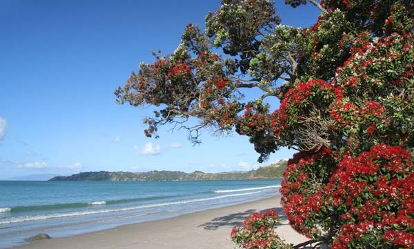 Onetangi, Waiheke, NZ Stayed here June 2011. Beautiful hiking, beaches, everything.
