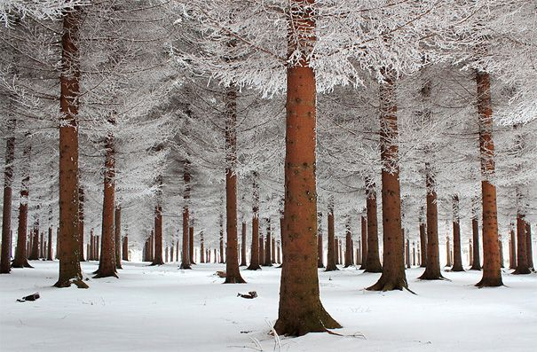 stunning: Magic Forests, Nature, Winter Trees, Beautiful, Snow, Winter Wonderland, Landscape Photography, Places