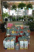 Another Great Garden Shop.