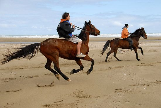 Wild horses by Himiona Grace  The boys were racing along the beach on their way home from school. The horse at the back is wild. They ride them hard here. That is the way it is in isolated NZ. You are as wild as your environment.  Mitimiti beach, North Hokianga.