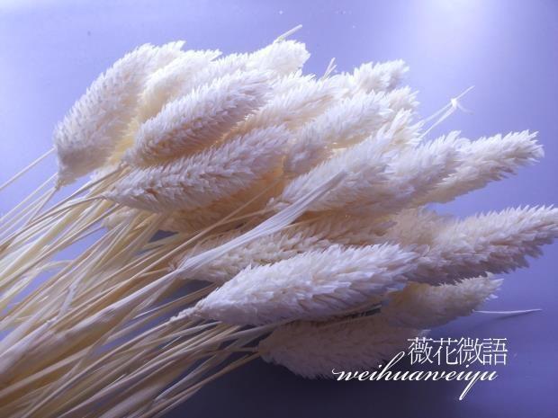 2015 новый юньнань сухих цветов сохранение diy ручной цветочные gem трава с белым кроликом хвост трава