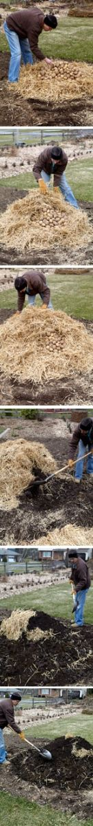 How to Make a Storage Clamp: Organic Gardening. In the absence of a root cellar, a clamp gives gardeners an inexpensive means to store fall-harvested root vegetables through the winter. The technique of insulating heaps of potatoes, turnips, carrots, and other vegetables with layers of straw and soil has been used for centuries in Europe.