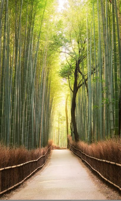 Bamboo Forest in Kyoto, Japan - Travel Photography