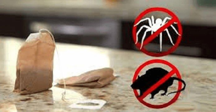 how to get rid of mice without poison