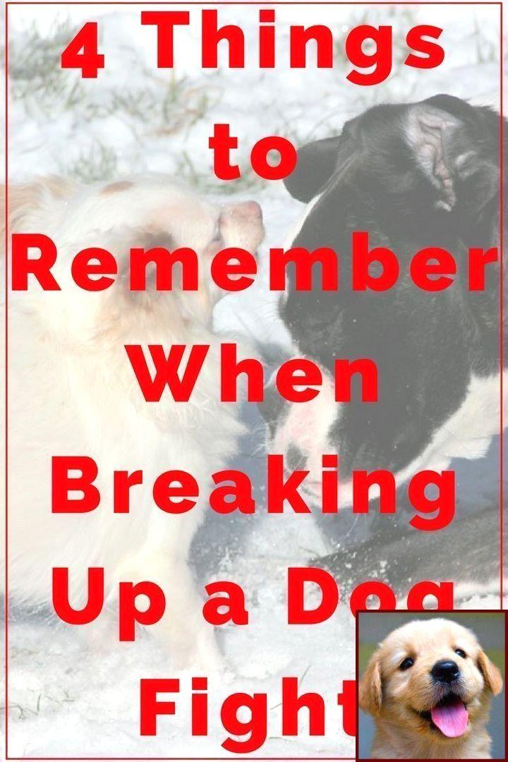 Dog Behavior List And Dog Training Classes Orange County Dog